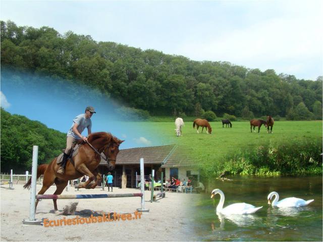 Pension chevaux poneys