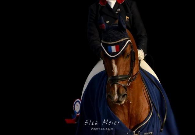 ETALON PERFORMER PFS - EUROPE DRESSAGE et GP OBSTACLE