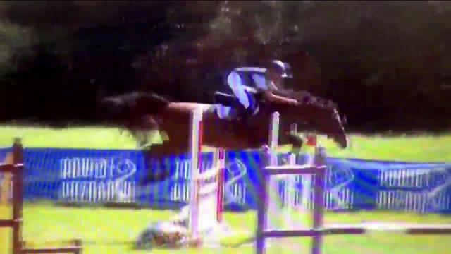 Autre Race de Poney A vendre 2004 Bai