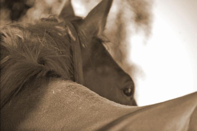 Développement personnel assisté par le cheval