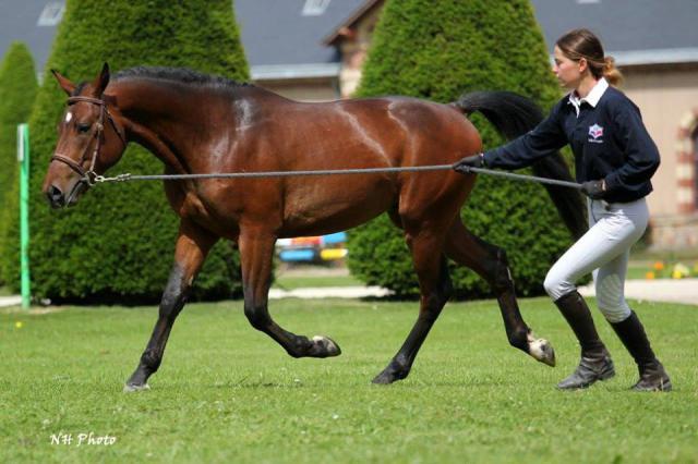Esteban du Lorey, mâle 2 ans, 1m45, PFS