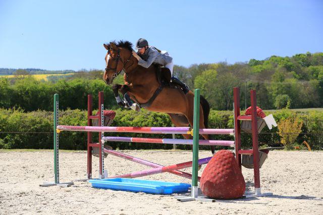 Eleveur vend cheval de sport 10ans gagnant CSO