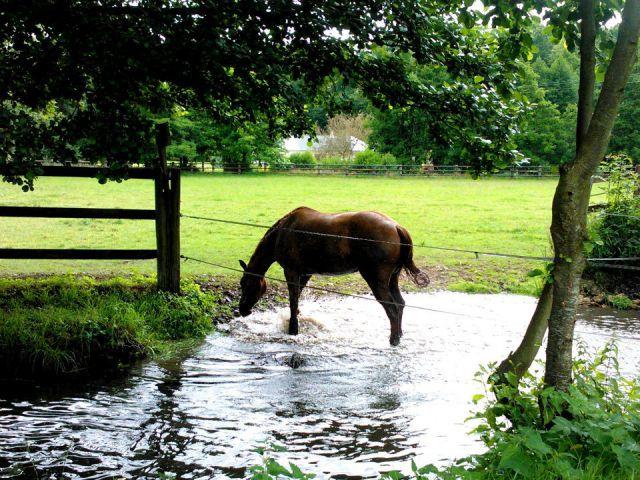 Pension chevaux proche Evreux