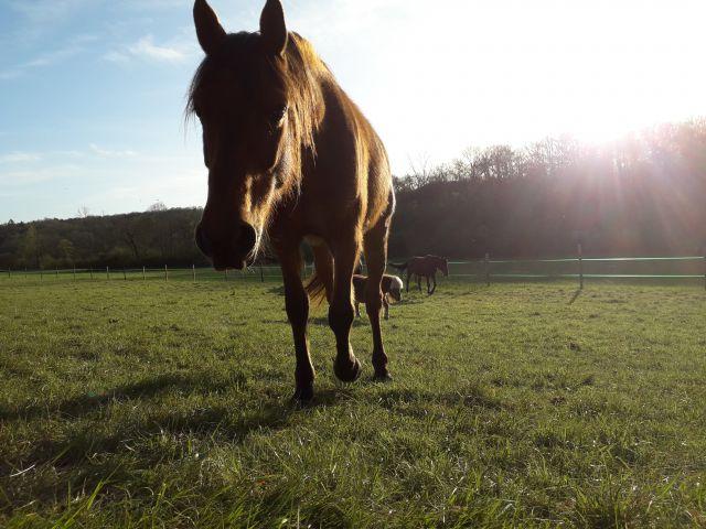 le périgord à cheval