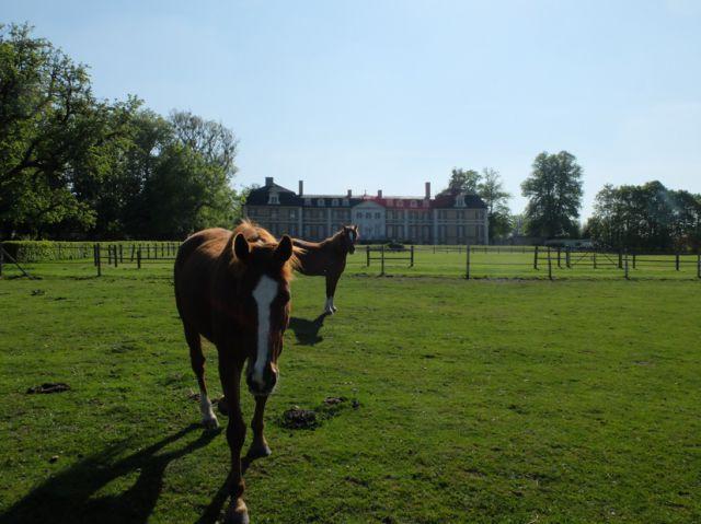 Pension chevaux en Normandie (Eure) proche Louviers