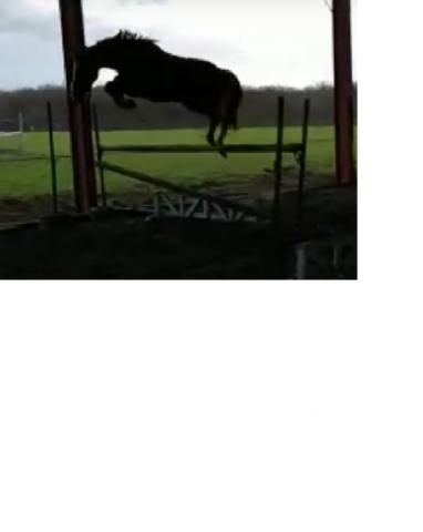 Photo cheval
