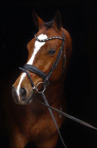 magnifique cheval de dressage a vendre
