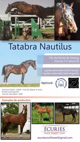 Tatabra Nautilius Selle Francais/Selle Argentin