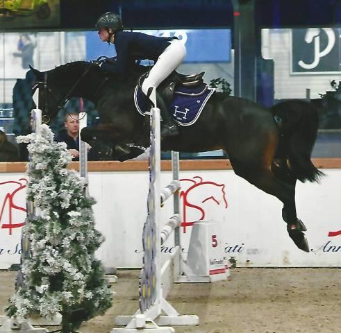 Elevage de chevaux de sport Belgique Namur CSO, CSI,CD