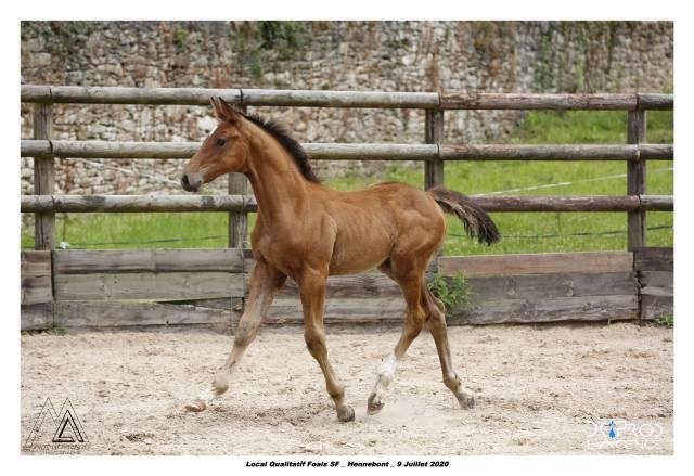 Foal mâle x Grandorado TN