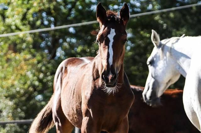 Foal de 6 mois par Emerald
