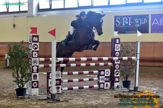 KWPN Cheval de Sport Néerlandais A vendre 2007 Bai