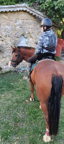 Cheval PP Franche montagne