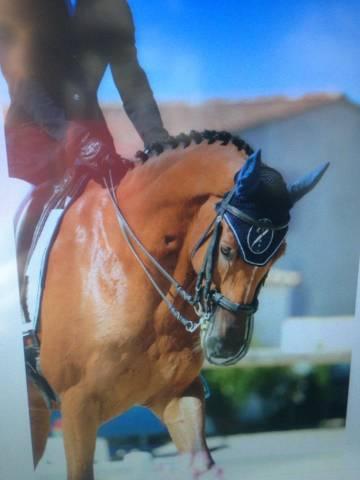 Très beau et bon cheval d'expérience