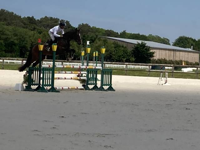 élevage chevaux cso  vends chevaux 6 - 7 et  10 ans