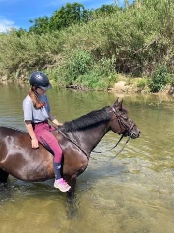 A vendre ou à louer poney de sport D pfs