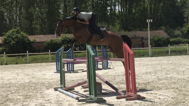cheval de sport 7 ans