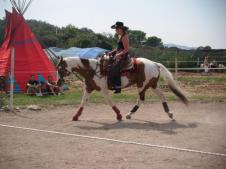 Rondo jo praise : saillie de rondo jo praise étalon paint horse
