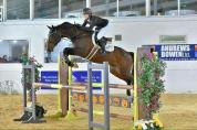 TOP CLASS YOUNG SHOW JUMPER BY CARDENTO