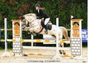 Demi pension pour poney