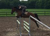 7yo Gelding by Canturano