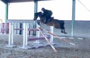 Poney de sport 9 ans