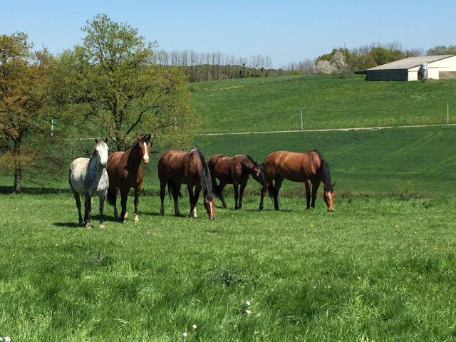 pensions chevaux sur 70 ha + installations