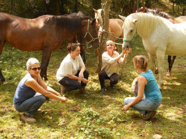 Le Cheval Thérapeute, Développement personnel et cheval