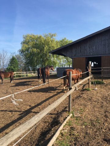 Pension-Retraite Le Ranch Des Saules