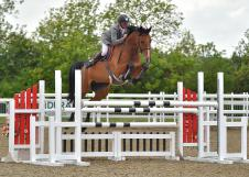 Double dutch  superb 17hh show jumping mare by indoctro