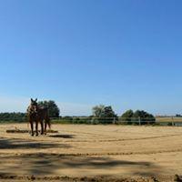 Pension pour chevaux dans le JURA à Balaiseaux