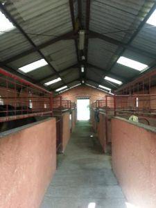 pension associative chevaux