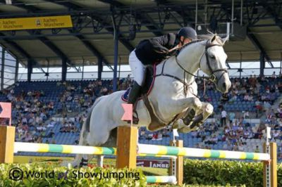 CLOUD NINE ( lando x Calido) INTERNATIONAL SJ STALLION