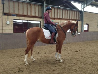 GERONIMO P(GOODTIMES x FLEMMINGH) TOP DRESSAGE PROSPECT