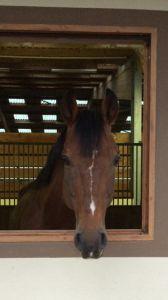 Vend cheval de promenade 5000 euros 14 ans