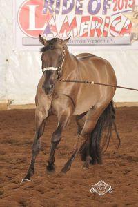 Mjk glo exquisiteleo : etalon quarter horse smoky grullo