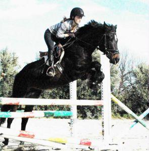 Cheval de sport allemand a vendre 2008 bai brun par corde santo stefano