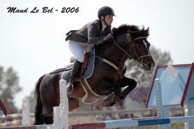Ibara : saillie connemara ancien poney de grand prix cso