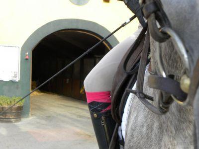 Pupilaje, doma, hospedaje, pensión de caballos