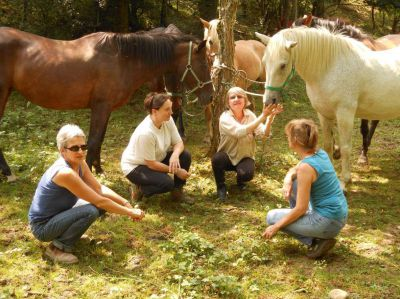 Stage adulte 2019 : Le Cheval Thérapeute
