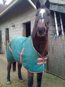 Recherche pension familiale pour 2 chevaux