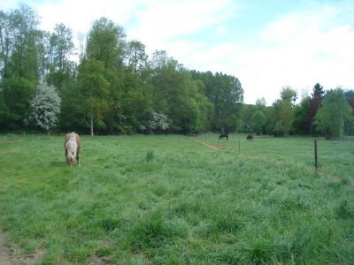 Pensions Chevaux