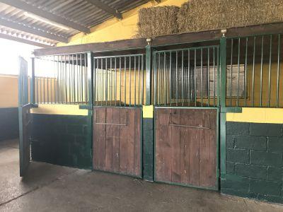 Box pour chevaux a louer