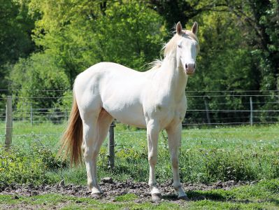 NEW WIMPY CAT - Quarter Horse 2015