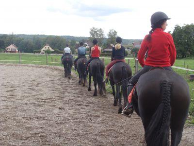 Recherche stagiaires élevage chevaux frisons