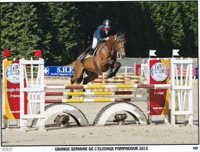 Etalon AA top genetique CSO/CCE