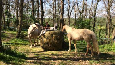 Roquembol Ranch - Paddock Paradise