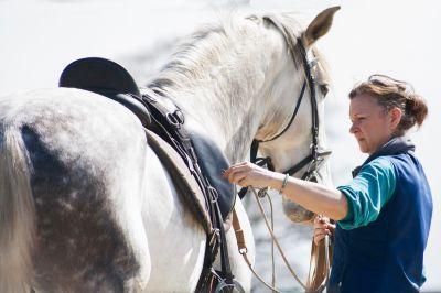 Equitation de tradition française et légéreté
