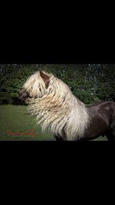 Wildfuchs - Schwarzwalder Fuchse  2002