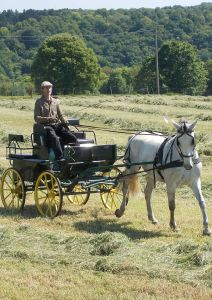 Carriage - Marathon for leisure